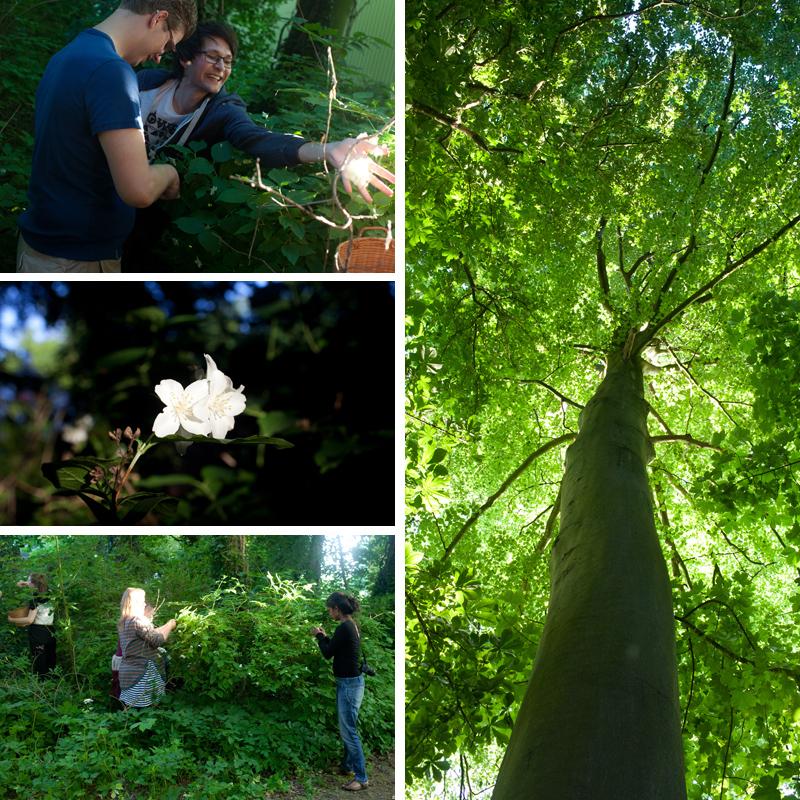 Jasmijn plukken in Wickenburghse bos - Werfzeep