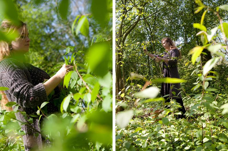 Boszeep - Oogsten in het Wickenburghse bos - Werfzeep