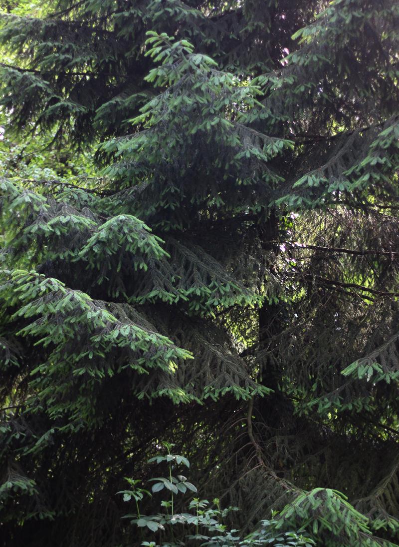 Boszeep - Wickenburghse bos - Werfzeep