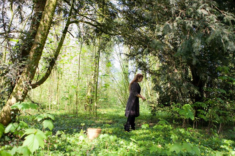 Oogsten in het Wickenburghse bos voor onze boszeep - Werfzeep