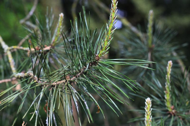 Grove den voor onze Boszeep- Wickenburghse bos - Werfzeep
