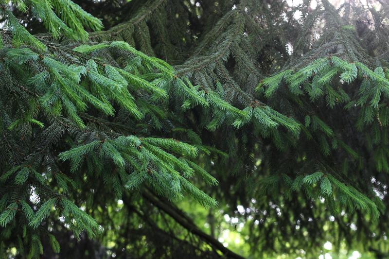 Spar voor onze boszeep- Wickenburghse bos - Werfzeep
