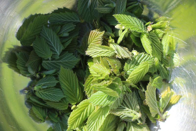 Frambozenblaadjes - ook ideaal voor frambozenbladthee - Werfzeep