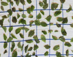 werfzeep-seizoenszeep met hazelaar e frambozenblad