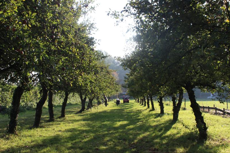 Appelboomgaard op Wickenburgh - Werfzeep