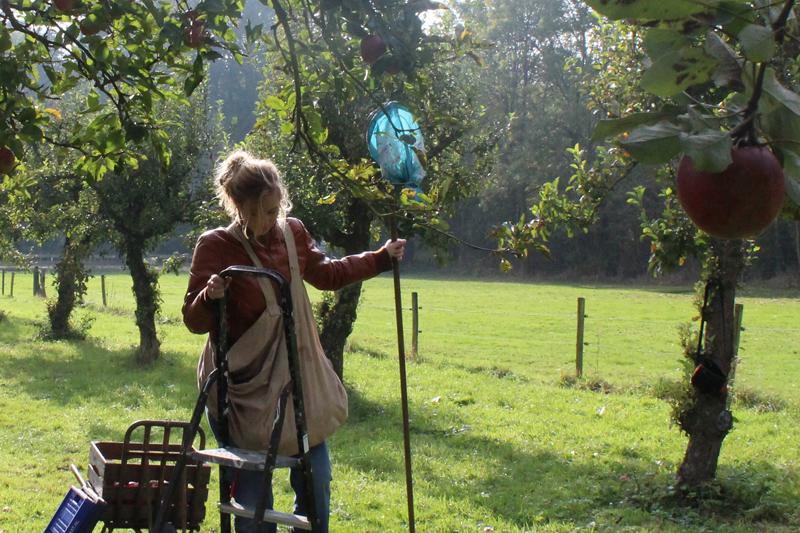 Evelien gaat appels plukken op landgoed Wickenburgh - Werfzeep