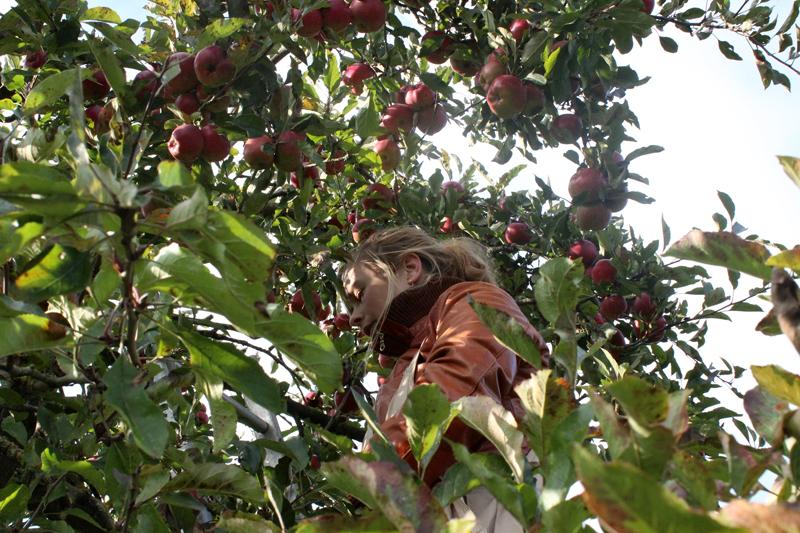 Evelien plukt appels op landgoed Wickenburgh - Werfzeep