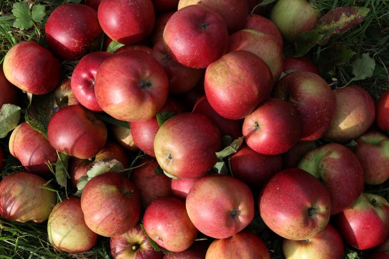 Melrose appels van Wickenburgh - Werfzeep