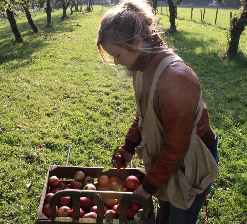 Evelien en een krat vol appels na het plukken op landgoed Wickenburgh - Werfzeep