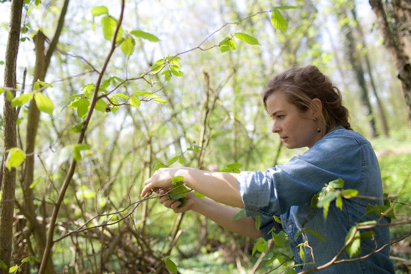 bosoogst op Wickenburgh - Werfzeep
