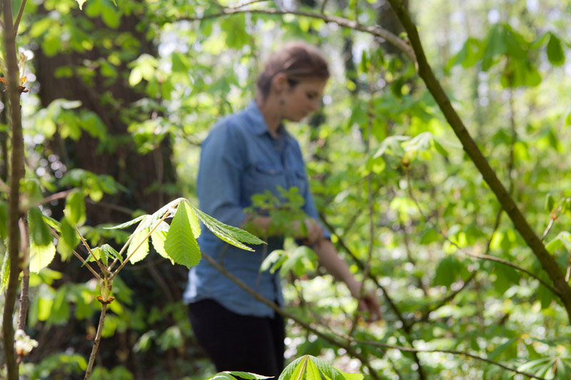 Oogsten - bosoogst op Wickenburgh - Werfzeep