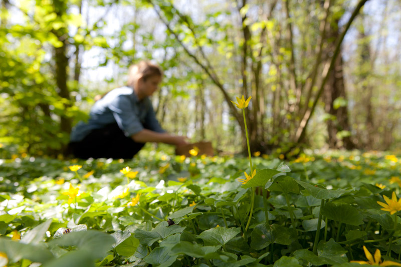 Evelien aan de slag - bosoogst op Wickenburgh - Werfzeep