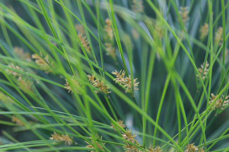 Papyrus in de Botanische Tuinen in Utrecht. Een van onze ingrediënten in de Botanische Tuinenzeep I. - Werfzeep