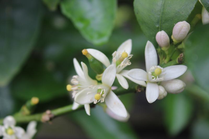 de Botanische Tuinen Utrecht - Werfzeep