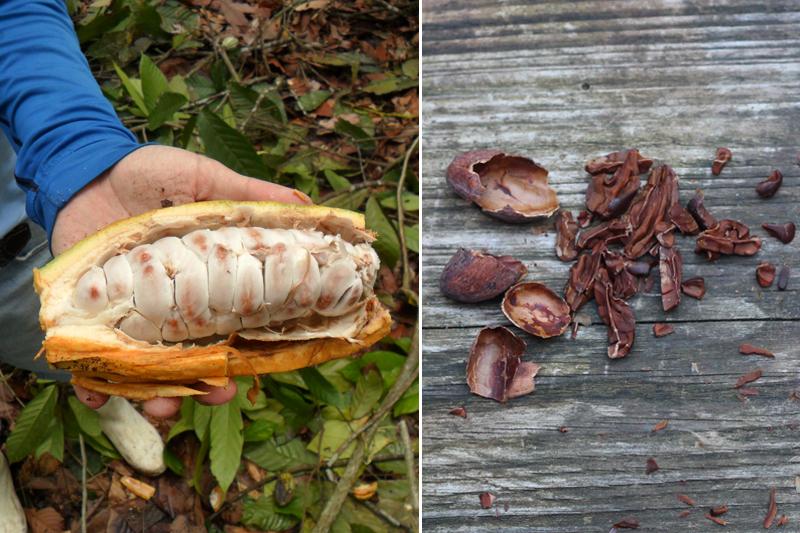 Cacaopeul en cacaobonen voor in onze chocoladeswirl - Werfzeep