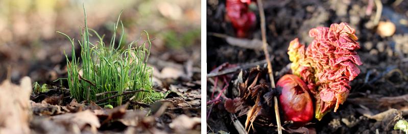 Bieslook en rabarber - Voorjaar in het bos - Werfzeep
