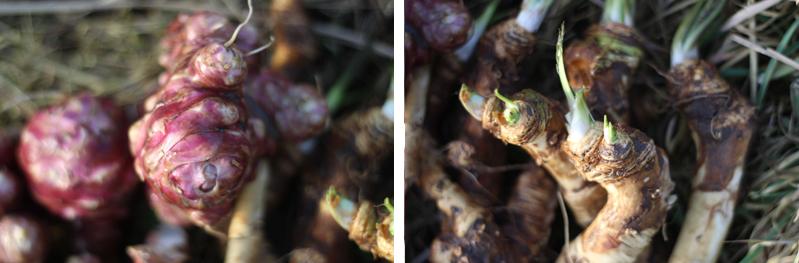 Aardpeer en mierikswortel - Voorjaar in het bos - Werfzeep
