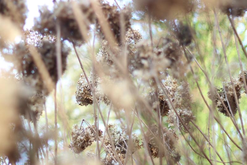 Voorjaar in het bos - Werfzeep