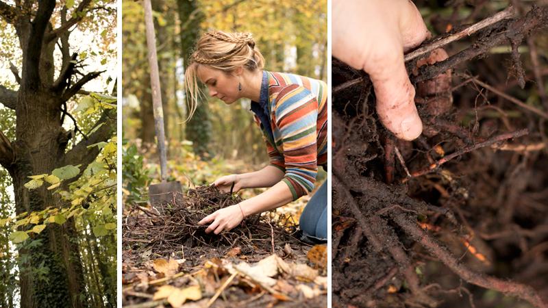 Meekrap oogsten in het bos