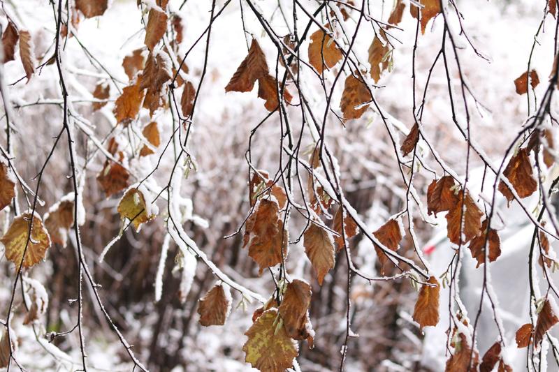 Winter op Wickenburgh