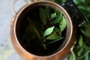 Alambiek met laurierblad om olie te stoken - Werfzeep