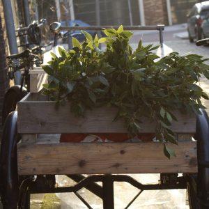 bakfiets vol oogst voor Botanische Tuinen Zeep- Werfzeep