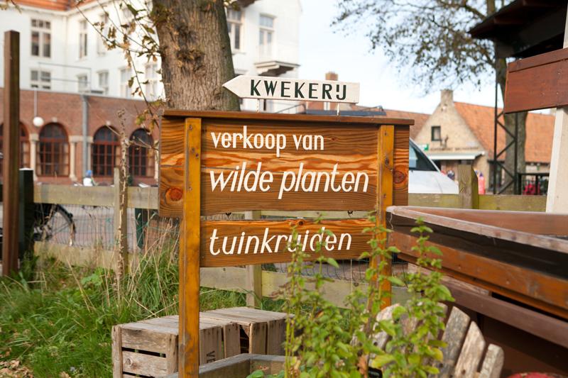Werfzeep Schiermonnikoog Kwekerij De Wilde Akelei