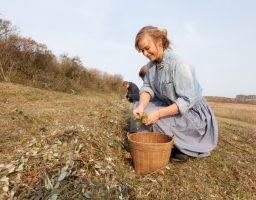 Evelien van Zonneveld raapt watermunt op Schiermonnikoog