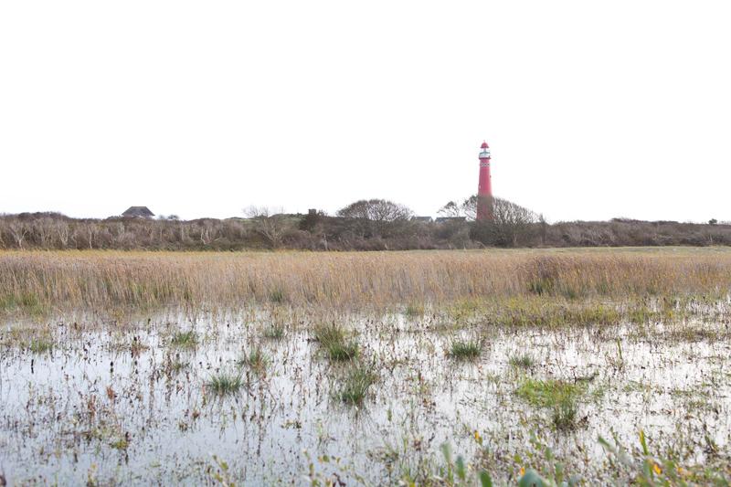 Schiermonnikoog Noordertoren vuurtoren Watermunt rapen