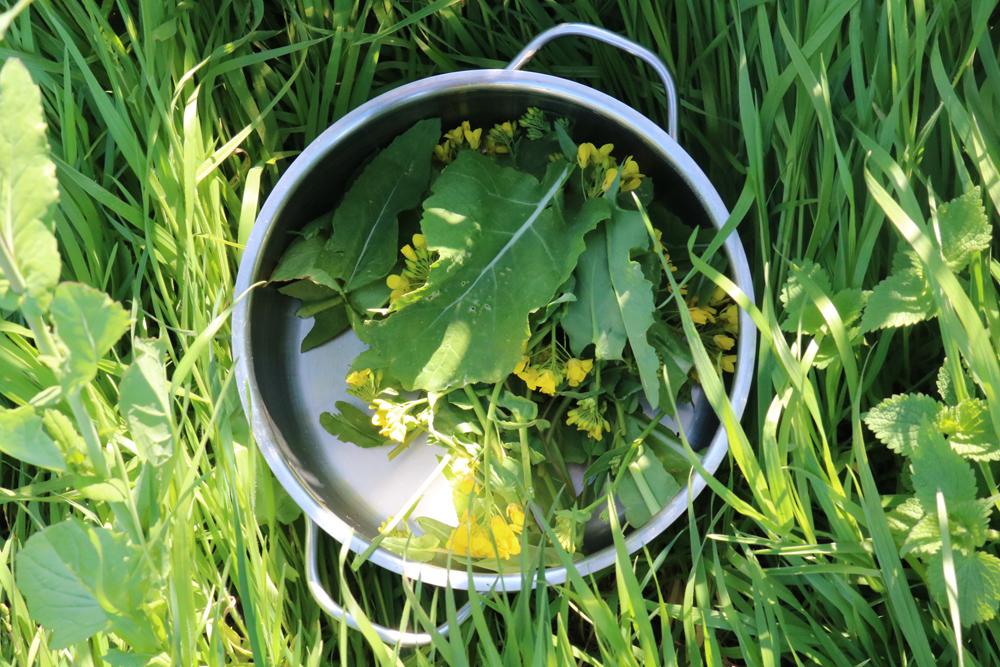 koolzaad blad en bloem voor wildplukpasta - Werfzeep