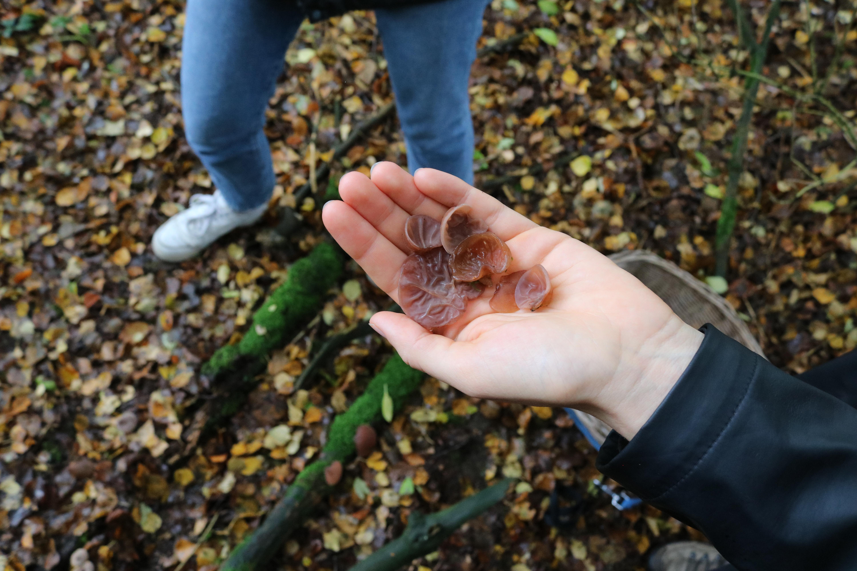 Werfzeep bospaddestoelen plukken wildpluk - judasoren