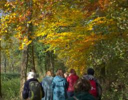 Werfzeep wildplukwandeling op landgoed wickenburgh in het kader van het zeepboek