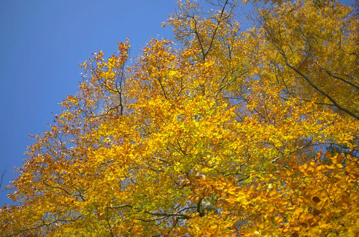 Wildpluk Zeepboek, Werfzeep wildplukwandeling in het Wickenburghse bos