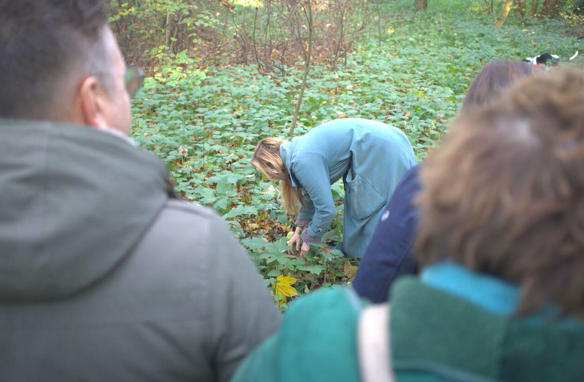 Wildplukken in het Wickenburghse bos, zevenblad voor pastasaus!