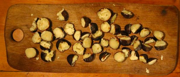 Aesculus Paardenkastanje - gekookte kastanjes gehalveerd - Werfzeep