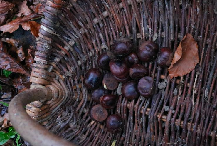 Aesculus Paardenkastanje - diy wintervoetencrème recept - Werfzeep