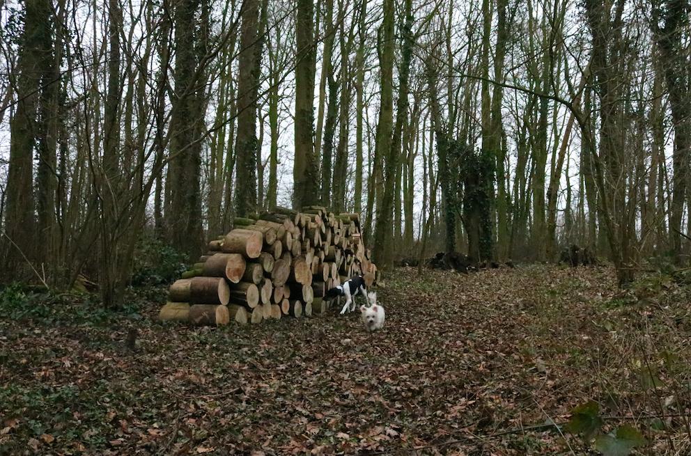Roxy en daisy in het Wickenburghse bos - Werfzeep