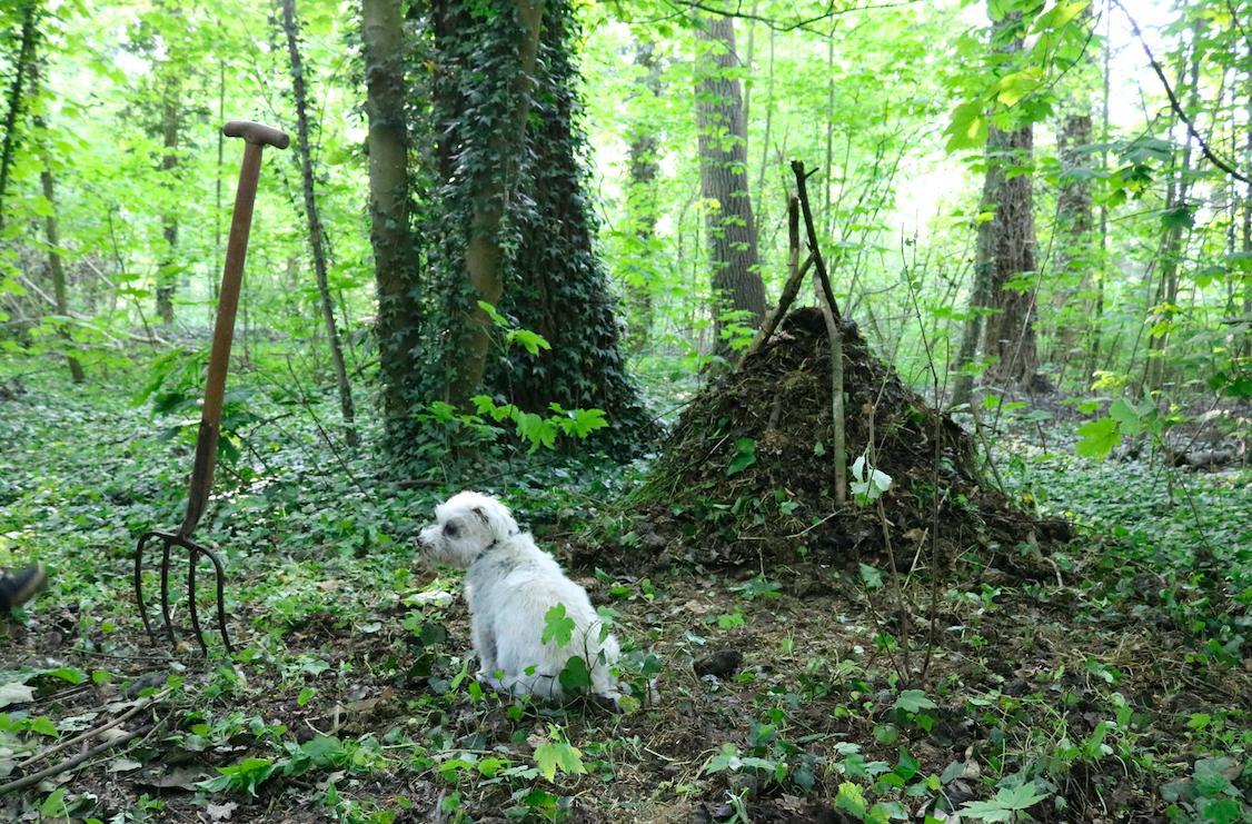 composthoop bouwen in 18 dagen - permacultuur in het bos - werfzeep