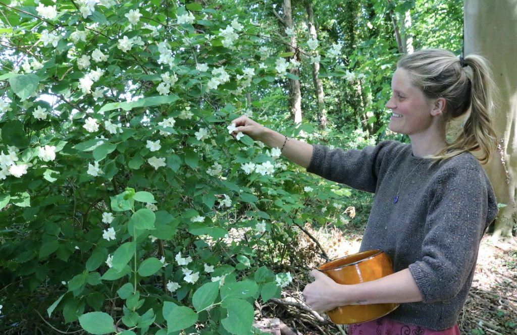 jasmijnoogst in het Wickenburghse bos - Sephora Werfzeep