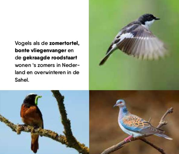 Savannezeep - Werfzeep - beschermde vogels savanne Vogelbescherming