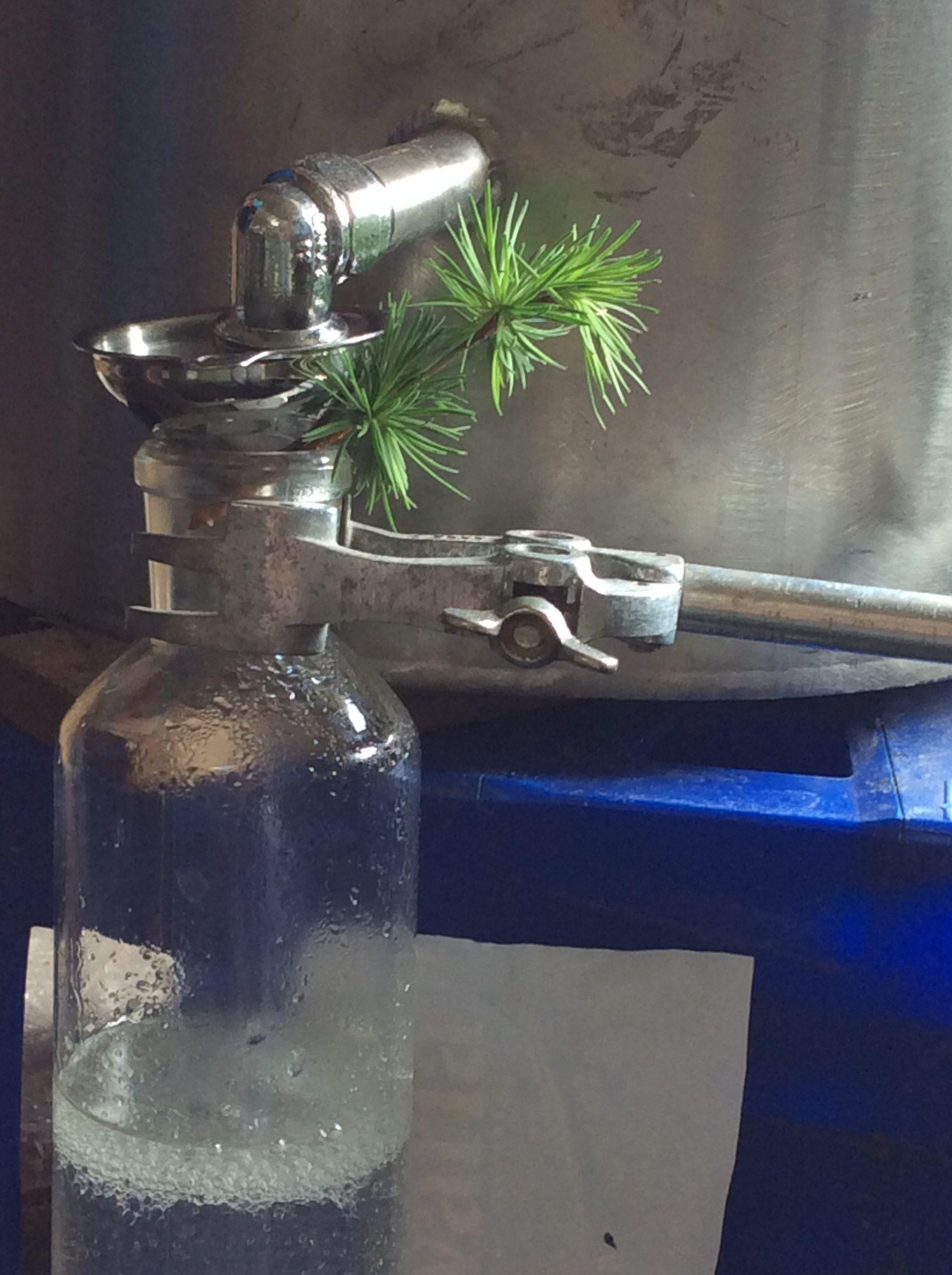 Larikshydrolaat Indekoperenketel destilleren Werfzeep