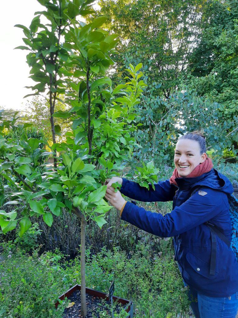 Werfzeep wildpluk Botanische Tuinen bergamot
