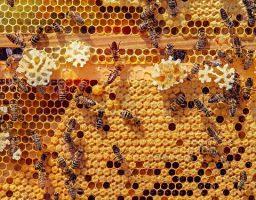 Werfzeep honingzeep bijen biologische honing